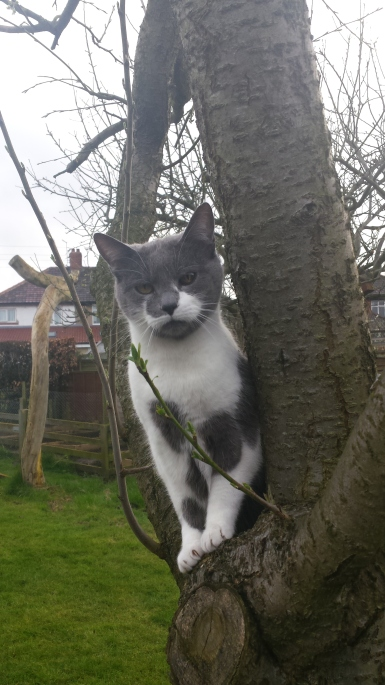 Grey and white cat sitting in a tree