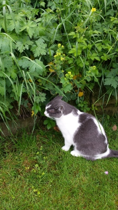Cat sniffing in border