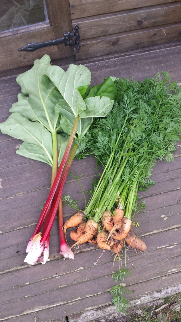 Home grown rhubarb and carrots