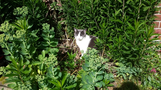 Cat in undergrowth