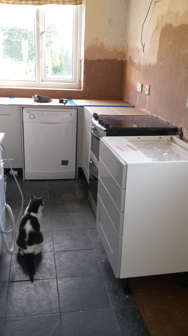 Cat sitting in new kitchen