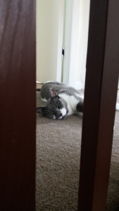 Grey and white cat lying on landing