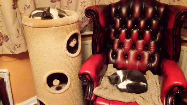 Cat on scratching post bed and cat in armchair