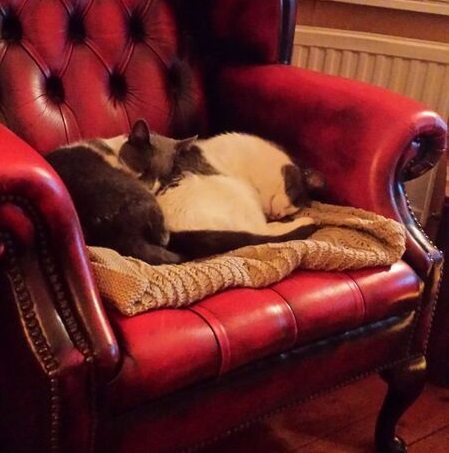 Two grey and white cats asleep on a red Chesterfield-style armchair