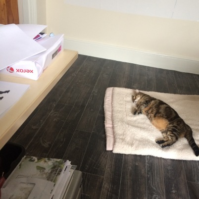 Tabby cat sleeping on a blanket in a home office
