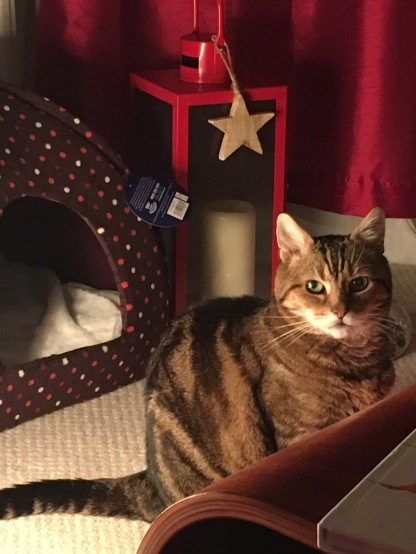 Tabby cat sitting next to an igloo-style cat bed