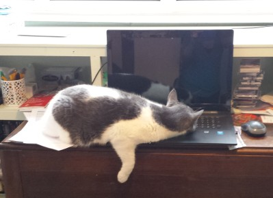Grey and white cat asleep on a laptop