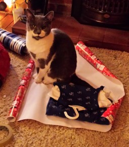 Grey and white cat sitting on Christmas wrapping paper