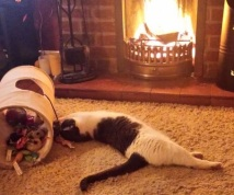 Grey and white cat stretched on rug before open fire