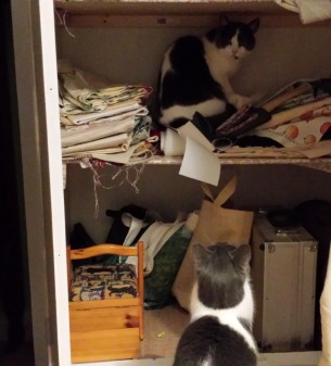 2 grey and white cats in a cupboard storing fabric