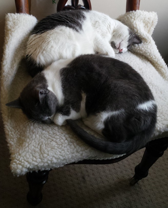 2 grey and white cats sleeping on a chair