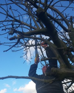 Man sawing branches off a tree in winter