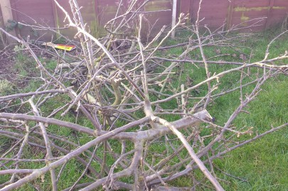 Pile of tree branches on grass