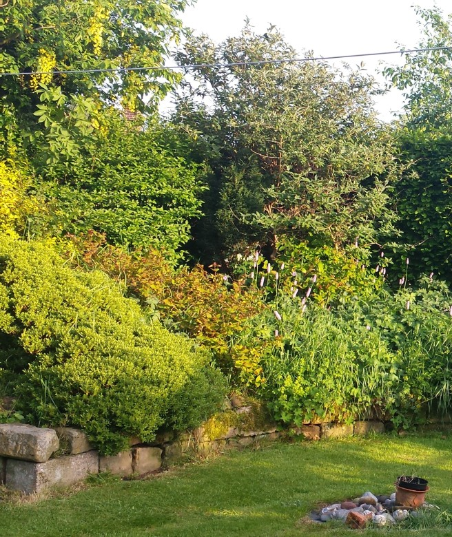 Garden area full of different green shrubs in summer