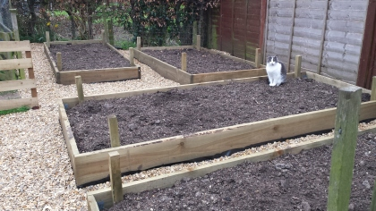 Grey and white cat sitting in a raised bed