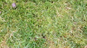 Close up of mossy grass
