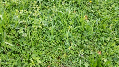 Lawn which contains a variety of different green foliage