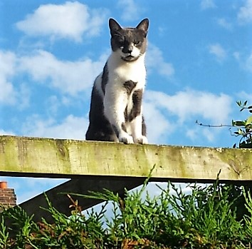 Grey and white cat on a wooden beam