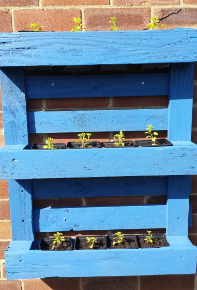 Bright blue planter made from a pallet and mounted on a brick wall