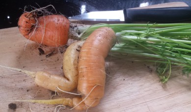 3 home-grown curly carrots sitting on a wooden chopping board