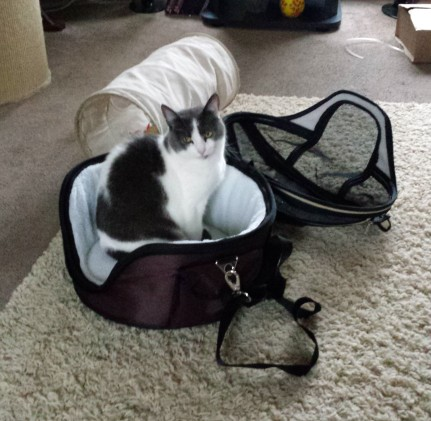 Grey and white cat in a round fabric cat carrier