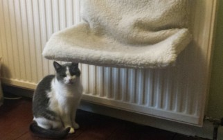 Grey and white cat sitting next to a large radiator