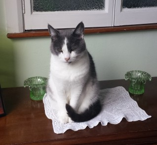 Grey and white cat sitting on a white lace mat