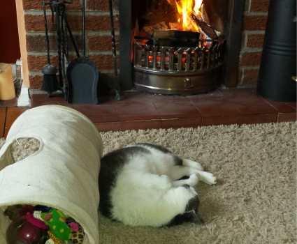 Grey and white cat asleep on a cream rug in front of an open fire