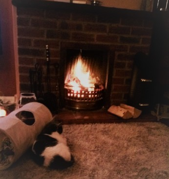Grey and white cat sitting by a log fire