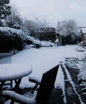 Garden in the snow