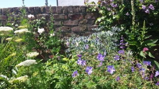 Garden border with wall behind. Lots of blue and white plants including thistles