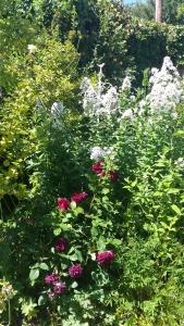 Variety of cottage garden plants in flower