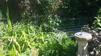 Bench surrounded by plants and with sundial in the foreground