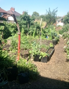 Allotment-style garden with paths and separate beds