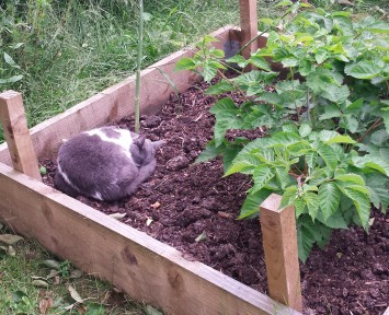 Grey and white cat asleep in a raised bed