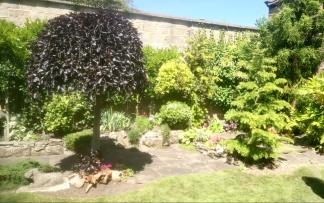 Walled garden with green trees and one almost black with a domed crown