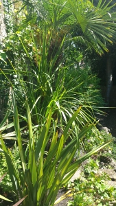 Palm trees and grasses