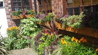 Courtyard with colourful pots and window boxes of plants