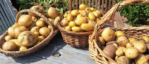 3 wicker baskets of potatoes