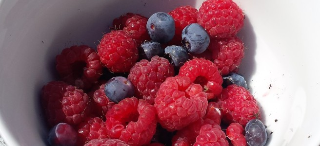 White bowl containing raspberries and blueberries