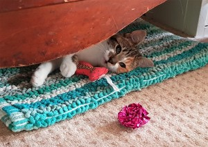 Tabby and white kitten lying on a rug and holding a pink fish-shaped toy