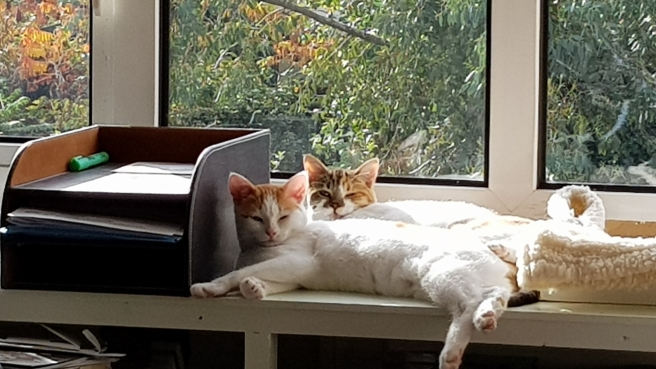 Two young mostly white cats sunbathing on a windowsill