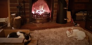 Grey and white cat and white and ginger kitten sitting on a rug in front of an open fire