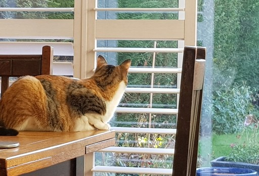 Tortoiseshell cat sitting on a table and looking out through a glass door to the garden beyond
