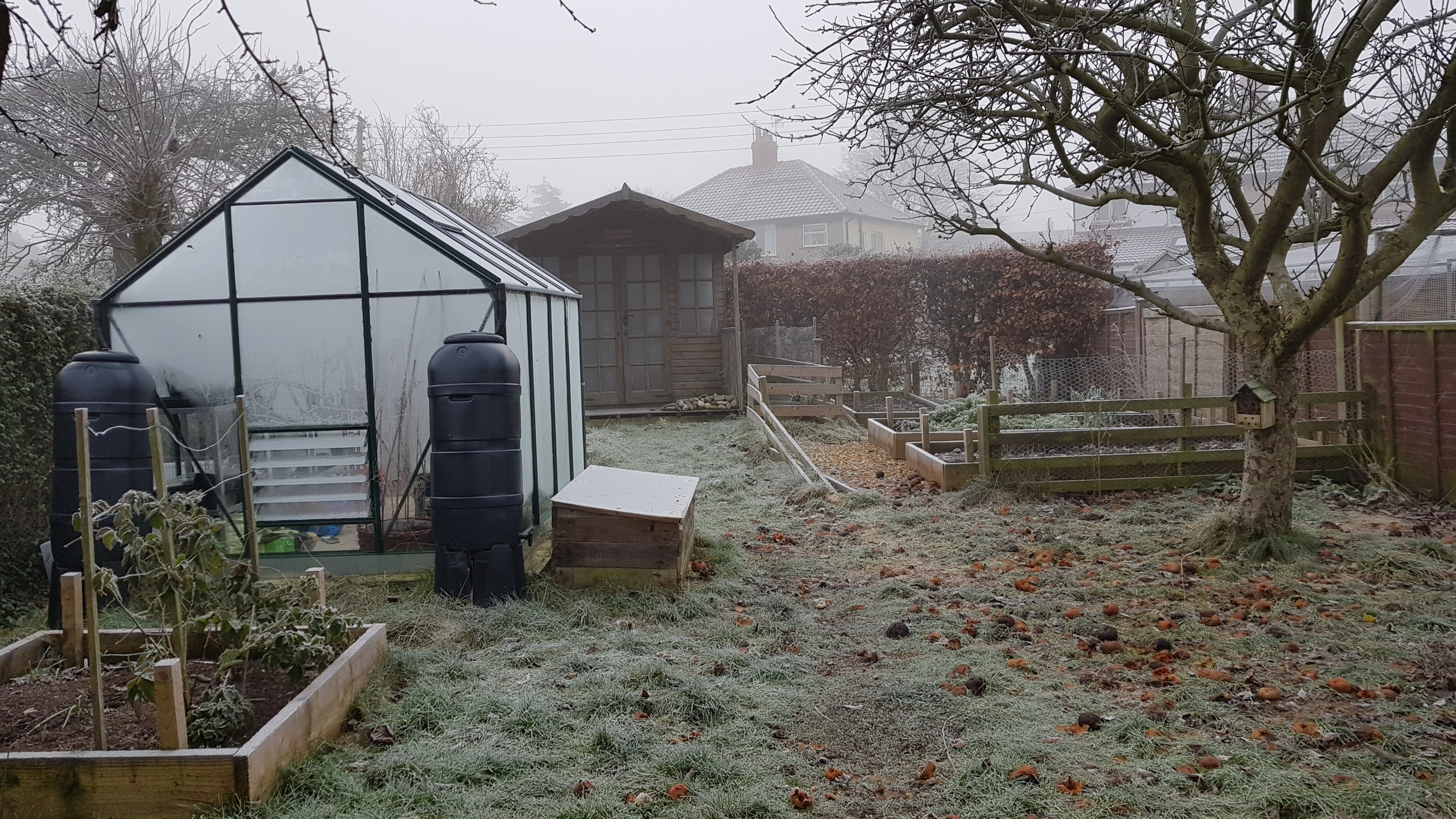 Garden with frost-covered greenhouse and frost on the grass