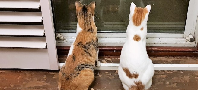 Two young cats with backs to camera looking out through a patio door