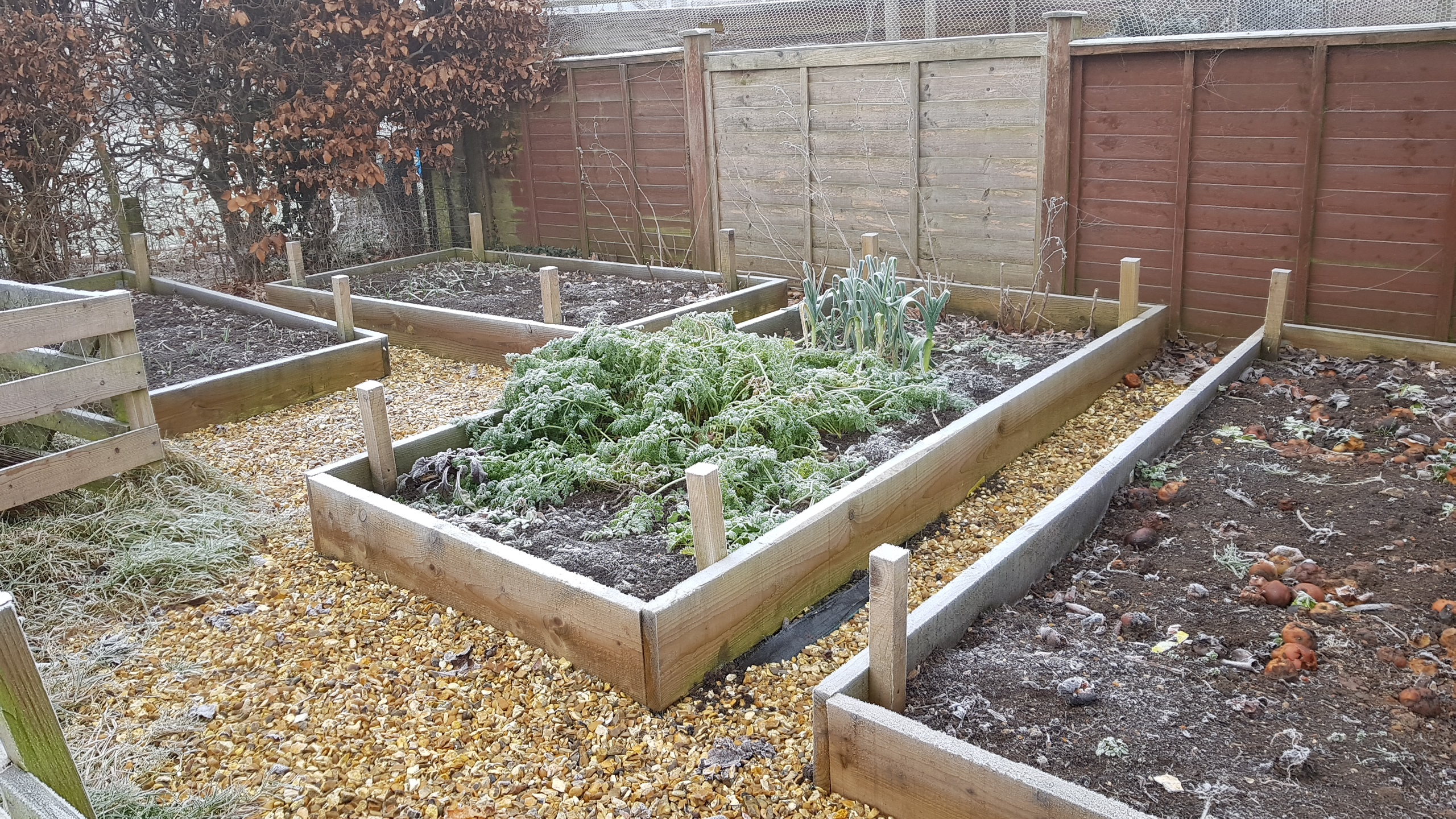 Raised beds covered in frost and empty apart from some carrots and leeks