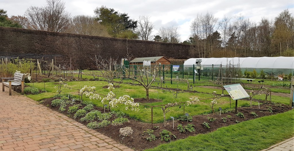 Large fruit and veg garden
