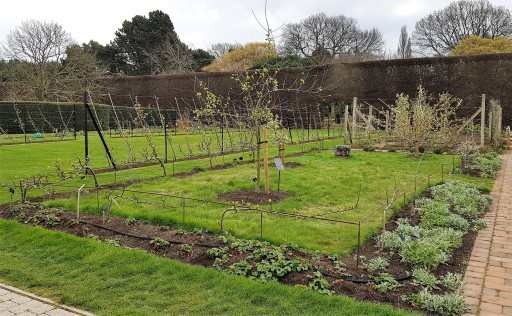 Early fruit garden with 2 young trees and herbs around the outside of the bed