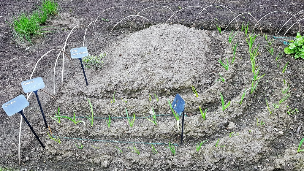 Small semi-circular veg bed with different crops arranged in curving rows